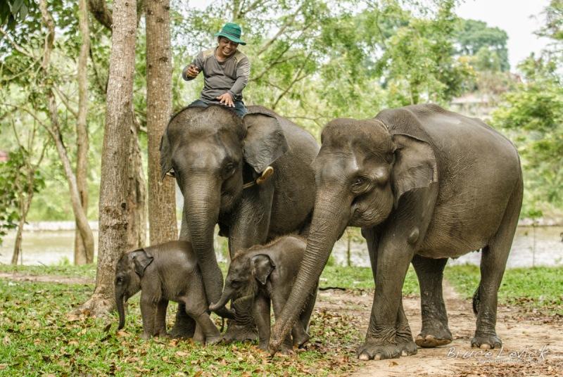Di sana pengunjung dapat menikmati alam liar ditemani oleh banyaknya gajah di sana.
