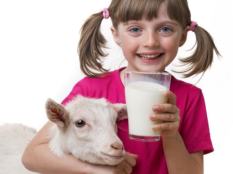 https: img.okeinfo.net content 2017 06 13 481 1714646 5-manfaat-ini-buktikan-susu-kambing-lebih-sehat-daripada-susu-sapi-I7xTYW9WpS.jpg