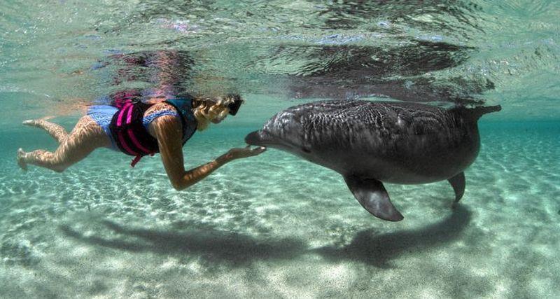 https: img.okeinfo.net content 2017 06 14 56 1715949 bahasa-lumba-lumba-nantinya-bisa-dipahami-manusia-gRbx9hO6pj.jpg