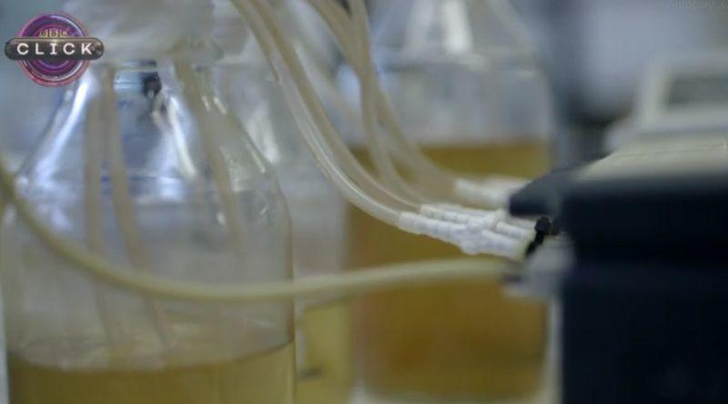 https: img.okeinfo.net content 2017 06 21 56 1721968 urine-bisa-digunakan-untuk-mengisi-baterai-smartphone-yvSsPlOOZz.jpg