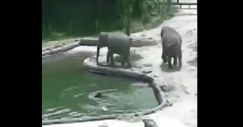 https: img.okeinfo.net content 2017 07 03 207 1727478 video-ini-jadi-bukti-betapa-induk-hewan-sayang-anaknya-zNI33elu7m.jpg