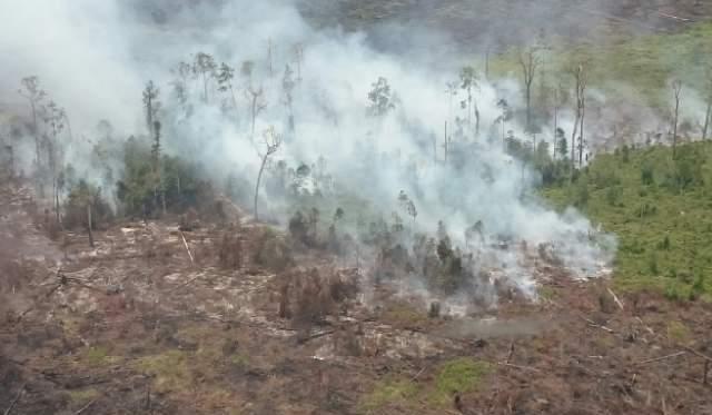 https: img.okeinfo.net content 2017 07 21 340 1741299 lagi-puluhan-hektare-lahan-gambut-di-aceh-barat-terbakar-bKfXytujMF.jpg