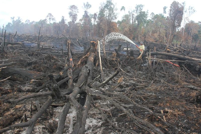 https: img.okeinfo.net content 2017 08 03 340 1749001 usai-kebakaran-222-hektare-lahan-titik-panas-kembali-muncul-di-aceh-oxQPZGlIhd.jpg