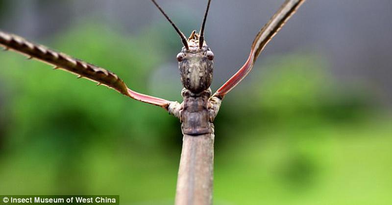 https: img.okeinfo.net content 2017 08 12 56 1754523 langka-ini-dia-serangga-terbesar-di-dunia-PXvQNPhQMs.jpg