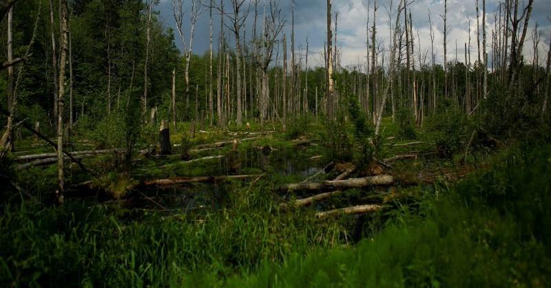 https: img.okeinfo.net content 2017 09 04 56 1769309 top-techno-misteri-hutan-yang-tak-bisa-dijelaskan-hingga-penampakan-monster-ini-bikin-merinding-3QISOE7BqJ.jpg