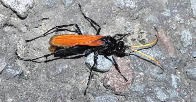 https: img.okeinfo.net content 2017 09 06 56 1770790 awas-5-serangga-ini-punya-sengatan-paling-menyakitkan-oXrXRjXbh0.jpg