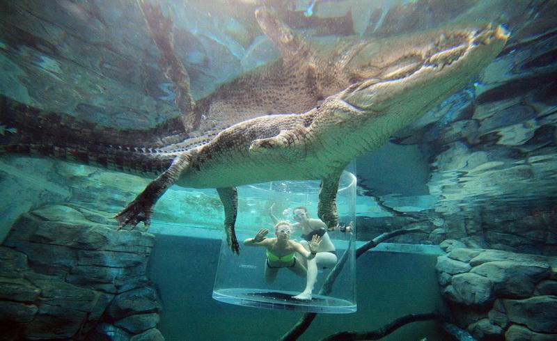 https: img.okeinfo.net content 2017 09 08 406 1771731 wisata-ekstrem-menyelam-ke-kolam-berisi-buaya-raksasa-berani-coba-cxuBjtnvsL.jpg