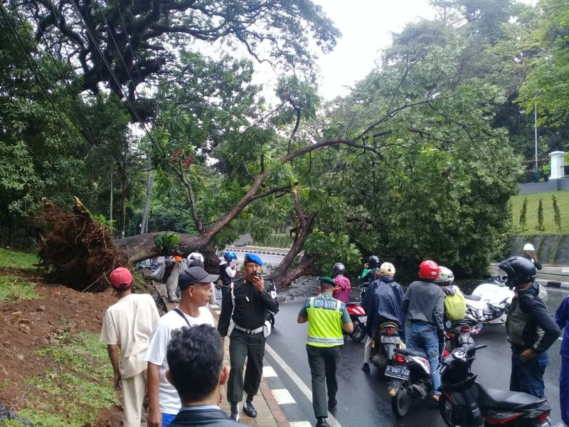 https: img.okeinfo.net content 2017 09 27 338 1784228 berusia-50-tahun-ini-dugaan-tumbangnya-pohon-besar-di-dekat-pintu-istana-bogor-kwxt0UCsRh.jpg