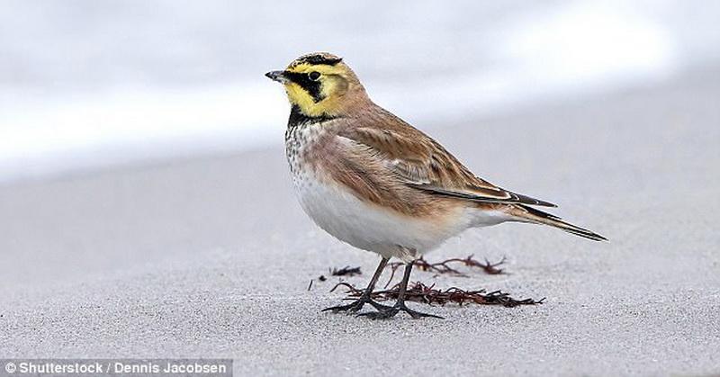 Peneliti Temukan Bulu Burung Bisa Lacak Polusi Udara, Nih Buktinya!