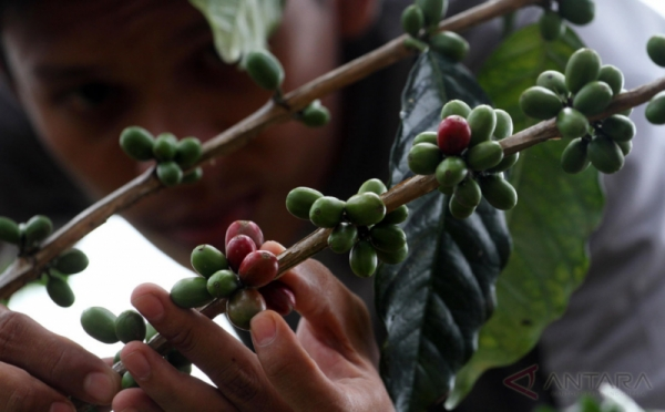 https: img.okeinfo.net content 2017 11 13 337 1813438 kembangkan-pertanian-kopi-deptan-siapkan-sumber-daya-manusia-dari-kaum-muda-cJwoe9sls2.jpg