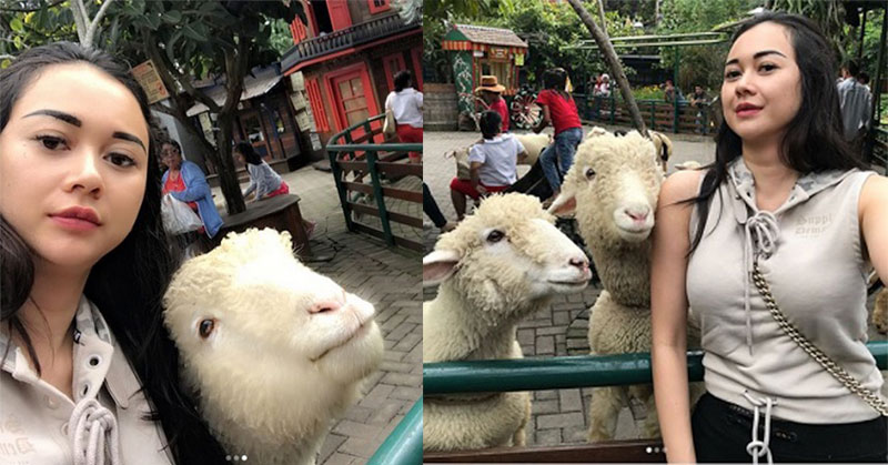 https: img.okeinfo.net content 2017 11 13 406 1813238 jalan-jalan-ke-lembang-aura-kasih-selfie-bareng-domba-lucu-banget-XBUucrUbqg.jpg