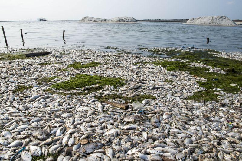 https: img.okeinfo.net content 2017 12 05 340 1825669 pasca-ratusan-ton-ikan-mati-udara-sekitaran-danau-maninjau-kini-tercemar-P8Vr9nQ7er.jpg