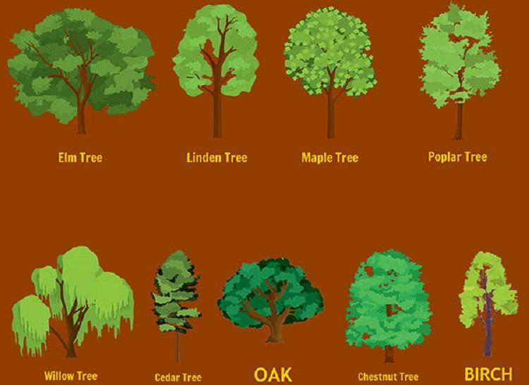 https: img.okeinfo.net content 2017 12 27 196 1836553 pilih-pohon-favoritmu-dan-lihat-prediksi-kehidupan-tahun-depan-apakah-beruntung-KzlzA7WQHC.jpg