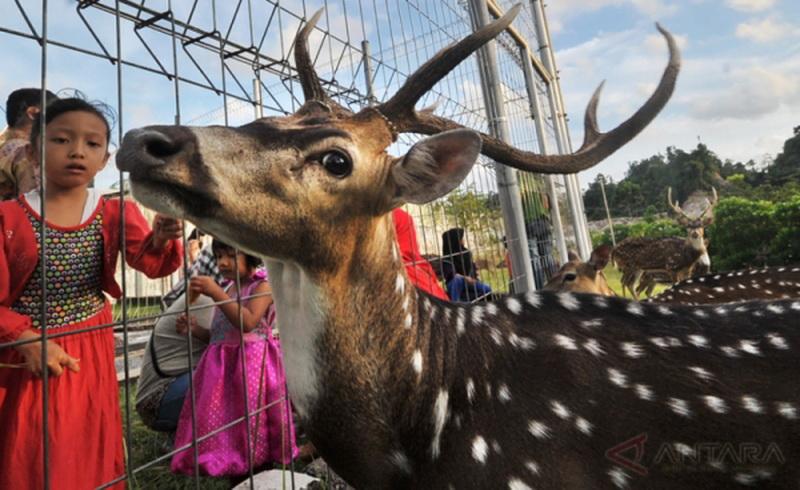 https: img.okeinfo.net content 2017 12 27 406 1836305 mini-zoo-sleman-destinasi-wisata-baru-di-yogyakarta-9RYapBit4V.jpg