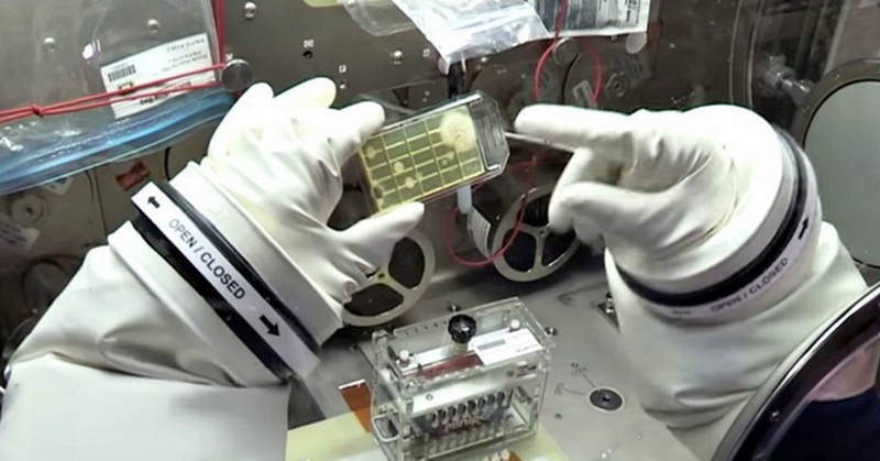 https: img.okeinfo.net content 2018 01 03 56 1839418 astronot-identifikasi-mikroba-di-luar-angkasa-untuk-pertama-kalinya-dUooULy513.jpg