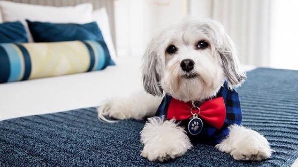 https: img.okeinfo.net content 2018 01 10 406 1842726 intip-kamar-hotel-berbintang-khusus-tempat-menginap-anjing-peliharaan-Jn5Zu8GtPh.jpg