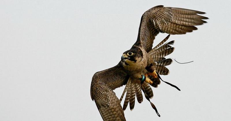 https: img.okeinfo.net content 2018 01 11 56 1843760 berburu-mangsa-elang-paria-bikin-kebakaran-hutan-jG5Ez2fFvT.jpg