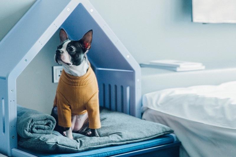 https: img.okeinfo.net content 2018 01 12 196 1844124 3-rekomendasi-hotel-khusus-hewan-peliharaan-SZHfQHBXpm.jpg