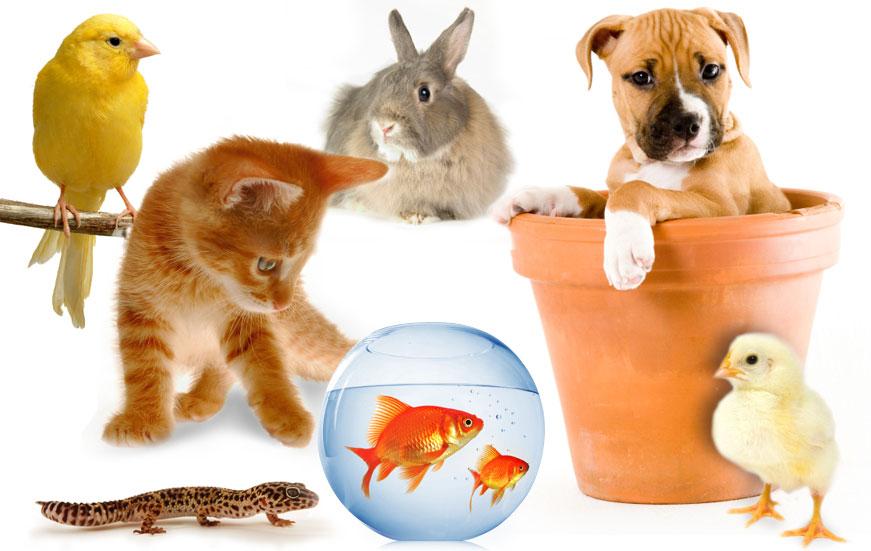 https: img.okeinfo.net content 2018 01 12 481 1844220 memelihara-hewan-di-rumah-ternyata-bisa-menghilangkan-stres-Ut0Lm6Nc5V.jpg