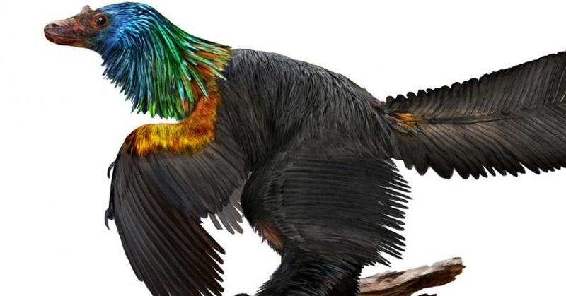 https: img.okeinfo.net content 2018 01 16 56 1845950 fosil-dinosaurus-berbulu-warna-warni-ditemukan-dcadPwCd5x.jpg