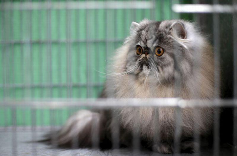 https: img.okeinfo.net content 2018 01 19 18 1847375 museum-di-turki-gelar-festival-film-bertemakan-kucing-jEh3ZkoqVs.jpg