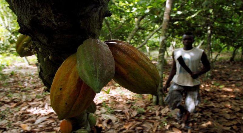 https: img.okeinfo.net content 2018 02 09 320 1857102 ri-impor-kakao-200-000-ton-di-2017-tertinggi-sepanjang-sejarah-idYSQDwdEc.jpg