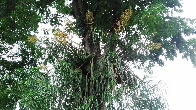 https: img.okeinfo.net content 2018 02 10 406 1857662 kebun-raya-terluas-di-indonesia-bakal-dibuka-tahun-2020-6jq09IO4dH.jpg