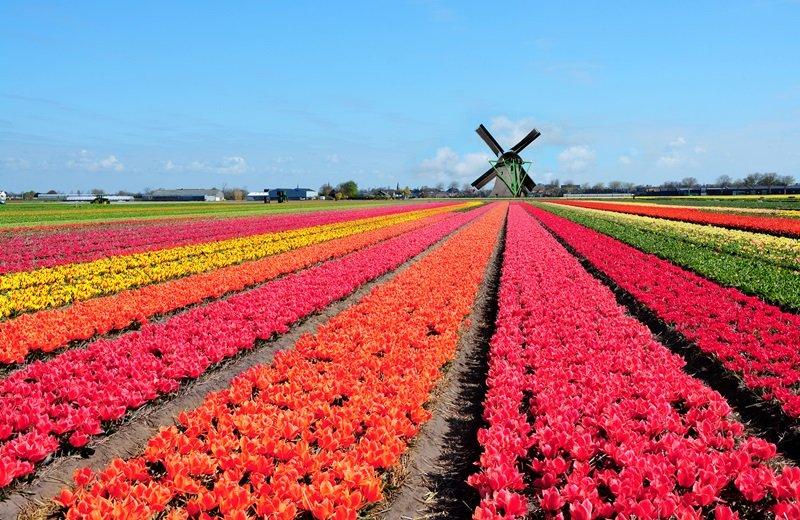 https: img.okeinfo.net content 2018 02 13 406 1859031 festival-keukenhof-belanda-pesona-hamparan-bunga-tulip-cantik-dan-megah-bswqn2hHjp.jpg