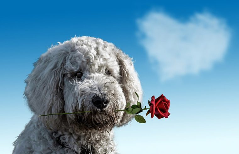 https: img.okeinfo.net content 2018 02 14 196 1859289 khusus-jomblo-berikut-5-cara-merayakan-valentine-dengan-hewan-peliharaan-h3luCXB4D8.jpg