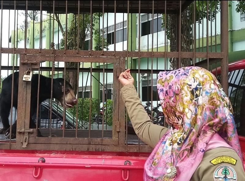 https: img.okeinfo.net content 2018 02 27 340 1865642 balai-konservasi-relokasi-dua-beruang-yang-tak-terawat-dari-rumah-warga-YcSPVIQ4t4.jpg