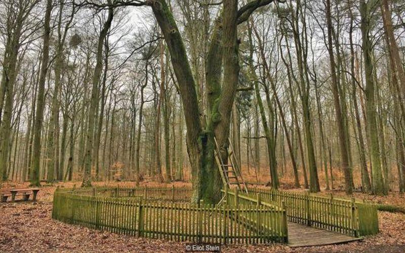 https: img.okeinfo.net content 2018 02 27 406 1865334 kisah-lubang-batang-pohon-ajaib-yang-menyatukan-ratusan-pasangan-di-jerman-PASBHSbPRj.jpg
