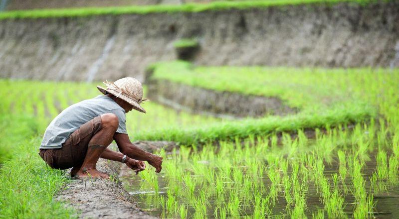 Pertumbuhan Sektor Pertanian Hingga Peternakan Hanya 3 4 Okezone