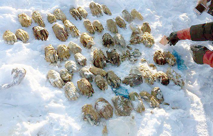 https: img.okeinfo.net content 2018 03 09 18 1870485 polisi-rusia-selidiki-penemuan-tas-berisi-54-tangan-manusia-di-siberia-iE8xkArAww.jpg