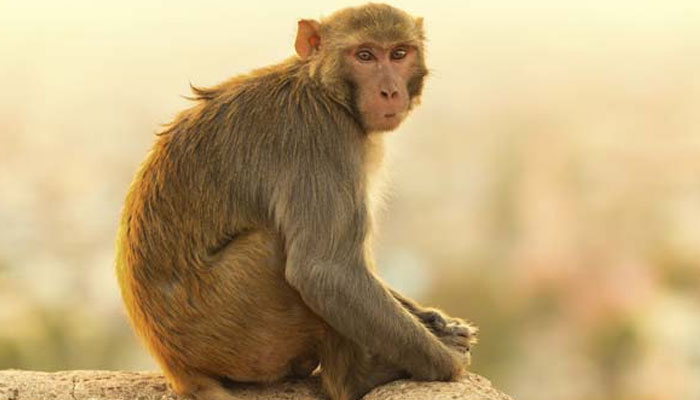 https: img.okeinfo.net content 2018 03 19 196 1874611 butuh-susu-monyet-ini-pelorotin-baju-turis-cantik-sampai-payudaranya-nongol-fA5ztQ0yYF.jpg