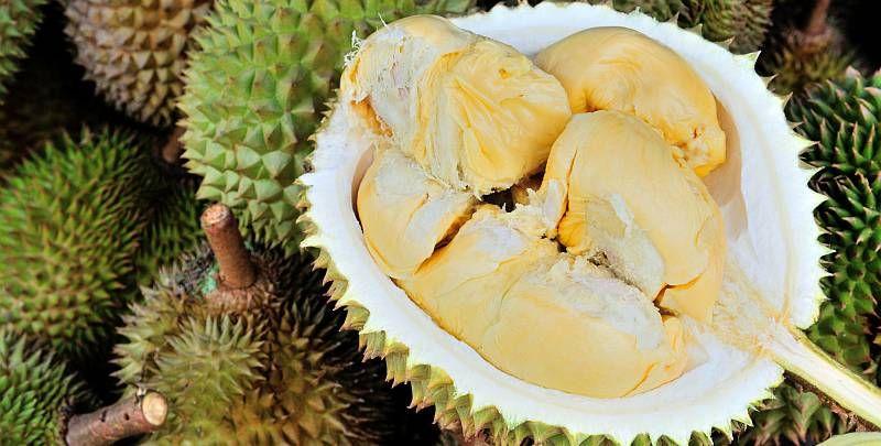 https: img.okeinfo.net content 2018 04 02 481 1880792 di-balik-rasanya-yang-lezat-yuk-kenali-6-fakta-kesehatan-tentang-durian-ZYazB4TF19.jpg