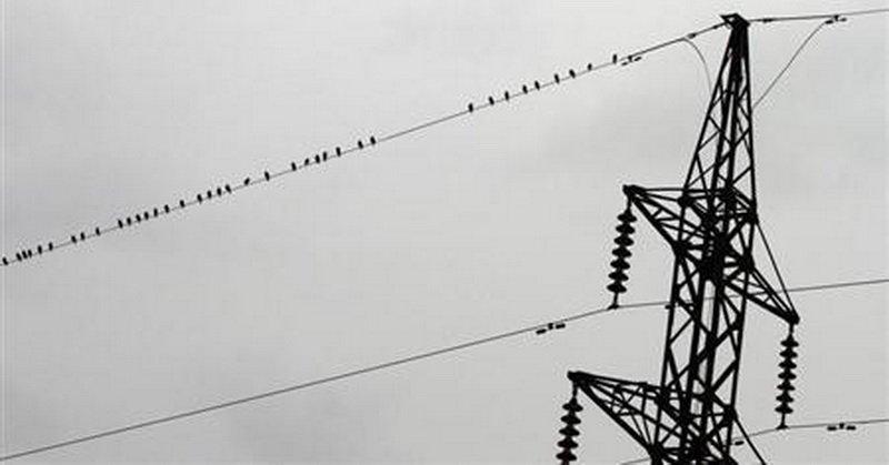 https: img.okeinfo.net content 2018 04 09 56 1884359 alasan-burung-tak-tersengat-listrik-saat-bertengger-di-kabel-listrik-hdavrIwkOr.jpg