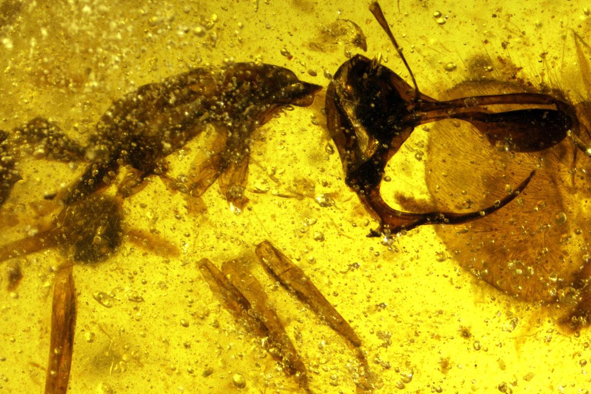 https: img.okeinfo.net content 2018 05 02 406 1893487 ditemukan-bentuk-semut-neraka-purbakala-mirip-setan-lihat-foto-fotonya-bikin-merinding-wL8fEYCcWQ.jpg