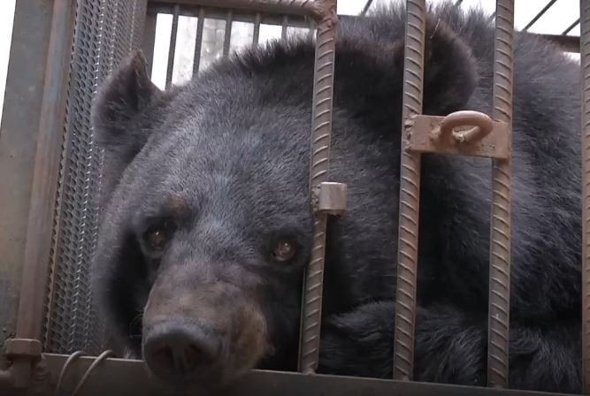 https: img.okeinfo.net content 2018 05 16 196 1899154 keluarga-di-china-salah-pelihara-binatang-dikira-anjing-ternyata-beruang-hitam-cnYAk8GwGc.JPG