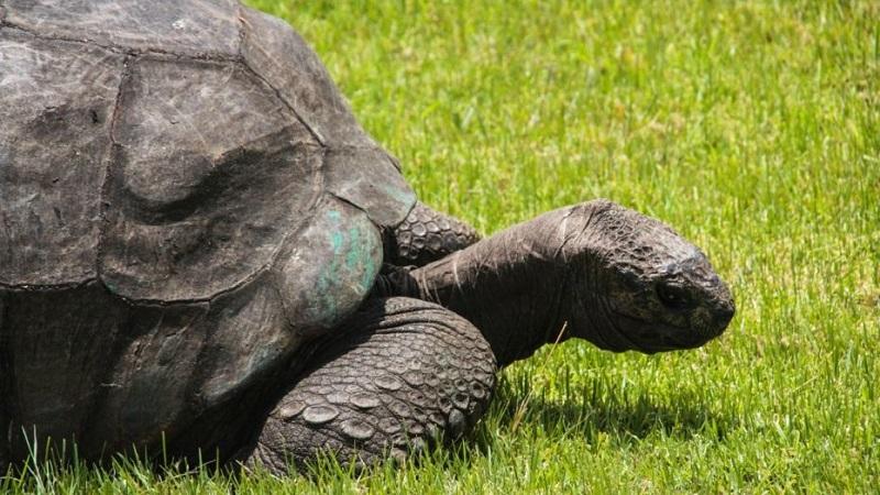 https: img.okeinfo.net content 2018 05 25 196 1902584 yuk-kenalan-sama-jonathan-kura-kura-tertua-di-dunia-yang-umurnya-186-tahun-7yQvbED36p.jpg