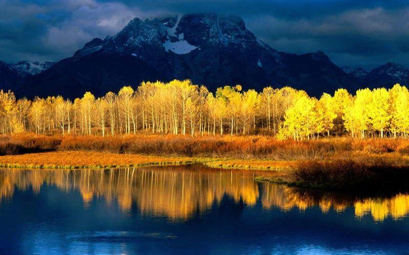 https: img.okeinfo.net content 2018 06 04 406 1906101 8-pohon-terunik-di-dunia-ini-bakal-bikin-kamu-melongo-melihatnya-1HYKZOmPYO.jpg