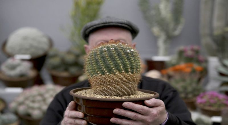 https: img.okeinfo.net content 2018 06 05 196 1906651 kocaknya-lari-ditusuk-kaktus-bikin-semangat-namun-perih-ZdRO4WVuvq.jpg