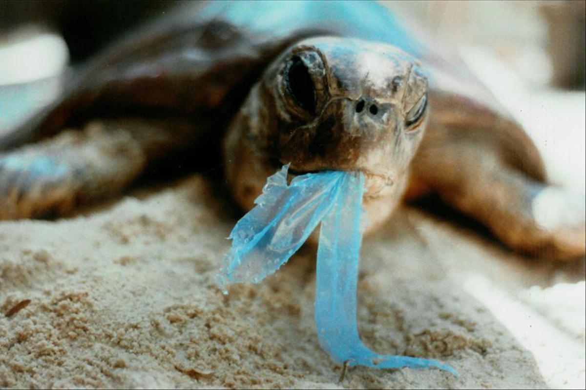 https: img.okeinfo.net content 2018 06 05 406 1906745 5-kasus-hewan-laut-makan-plastik-yang-menyayat-hati-bikin-kita-sadar-untuk-tidak-buang-sampah-ke-laut-kWbjsvC7Fp.jpg