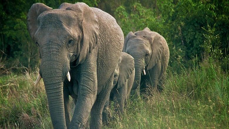 https: img.okeinfo.net content 2018 06 11 406 1909229 peduli-keberlangsungan-hidup-gajah-badak-bocah-7-tahun-ini-berhasil-ubah-dunia-14aj3EYfV0.jpg