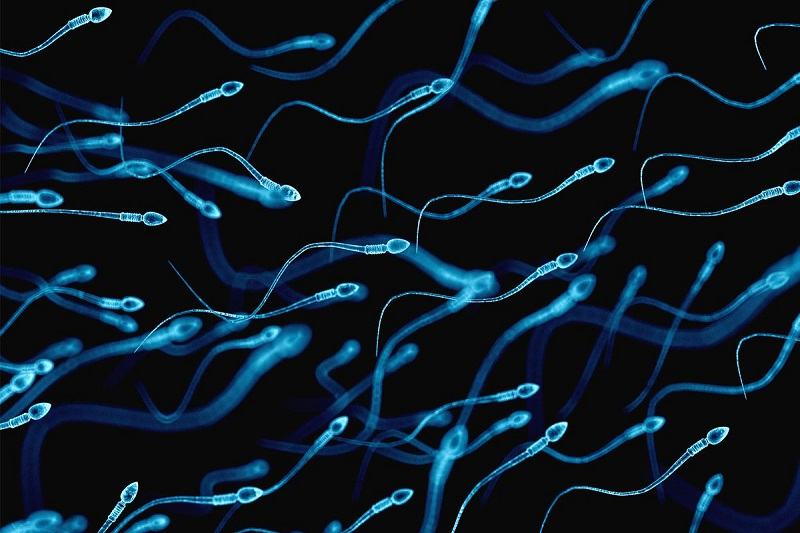 https: img.okeinfo.net content 2018 06 11 481 1909233 peneliti-temukan-bagian-dari-sperma-yang-memengaruhi-kualitas-dan-kesuburan-se2dcZmCak.jpg