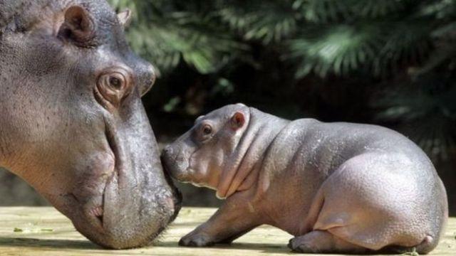 Unduh 5700 Koleksi Perang Gambar Lucu Binatang Terbaru