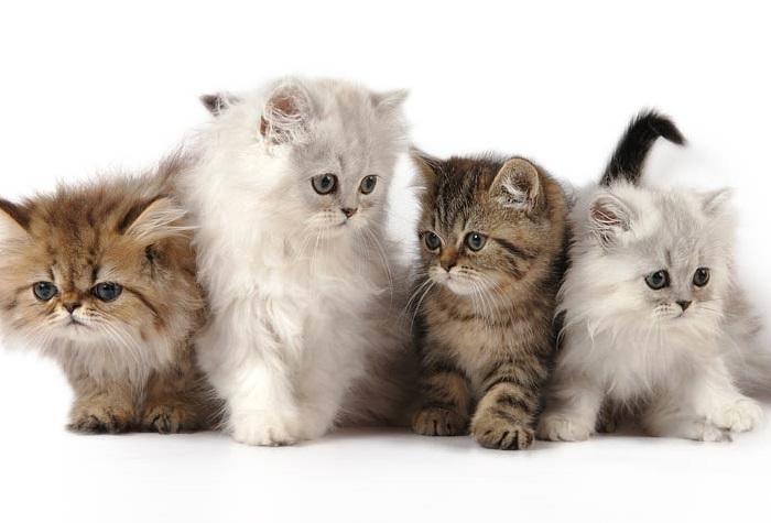 Nama Yg Bagus Untuk Kucing 81021 Nama Untuk Kucing Comel Lucu Dan Unik