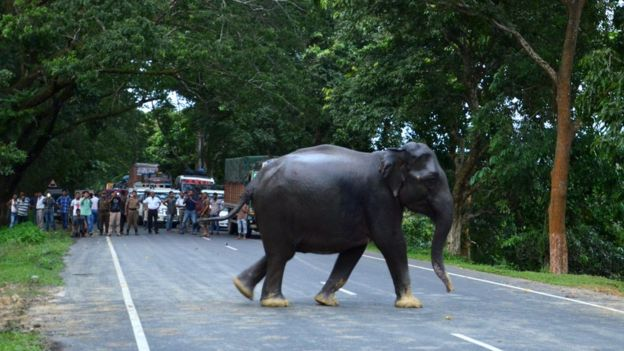 https: img.okeinfo.net content 2018 06 26 18 1914018 gajah-di-india-stres-akibat-terus-menerus-diusir-manusia-9Ci5J0BVvc.jpg