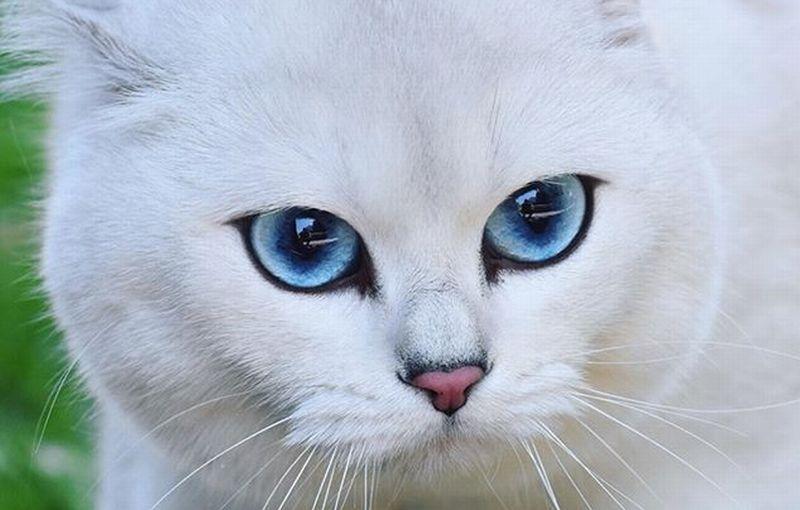https: img.okeinfo.net content 2018 07 06 196 1918620 kucing-cantik-ini-punya-1-2-juta-follower-di-instagram-kamu-pasti-kalah-usC6w1b0uZ.jpg