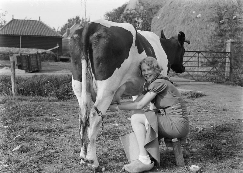 https: img.okeinfo.net content 2018 07 13 194 1922129 alasan-dutch-lady-identik-dengan-pemerah-susu-dalam-iklan-iklan-OSFKUazZZC.jpg