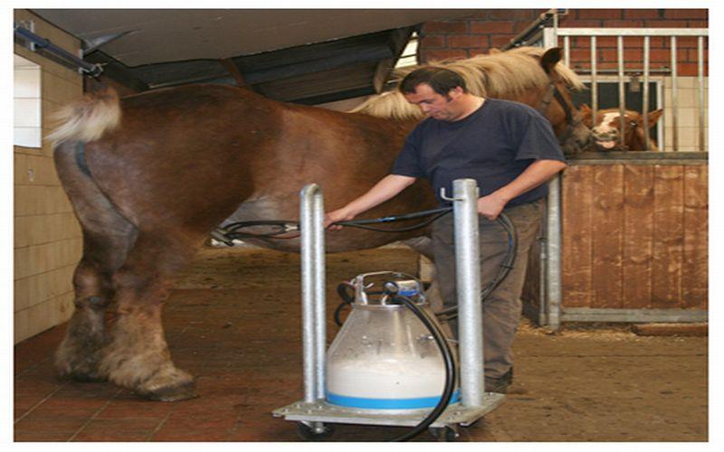https: img.okeinfo.net content 2018 07 13 481 1921968 3-jenis-susu-dipercaya-bikin-greng-di-ranjang-salah-satunya-susu-kuda-liar-AwDKOZtkjv.jpg